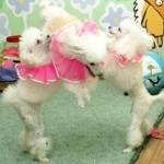 дрессированные собачки