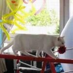 дрессированные кошки