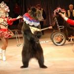 медведь дрессированный