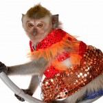 Дрессированная обезьяна на Новый год!