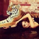 Тигрица аренда