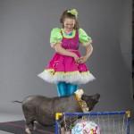 Дрессированная Мини свинка