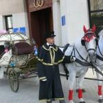 Тройка лошадей на свадьбу
