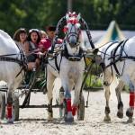 катание на лошадях с экипажем