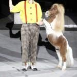 дрессированная мини лошадка